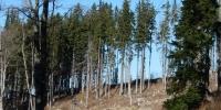 Lesy trochu prořídly, nadmořskou výškou i kvůli orkánu