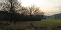 Zimní slunce ve větvích