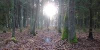 Boží hod a tajemná momentka v lese 1