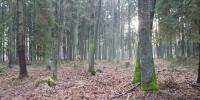 Boží hod a tajemná momentka v lese 2