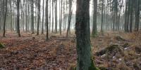 Boží hod a tajemná momentka v lese 3