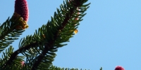 08-stezka-lipno-vrcholky-stromu-na-dosah